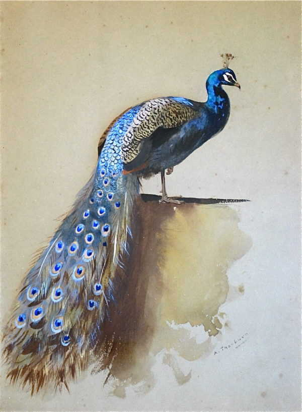 Sell Archibald Thorburn Peacock - Robert Perera Fine Art