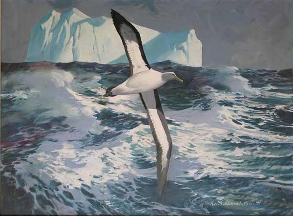 Keith Shackleton Birds sell artist Wanted Robert Perera Fine Art