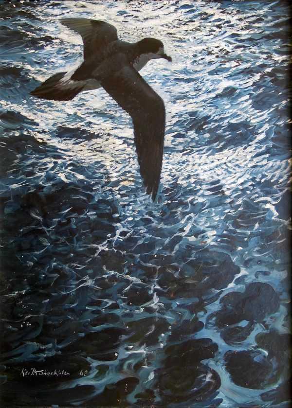 Sell Keith Shackleton Birds sell artist Robert Perera Fine Art