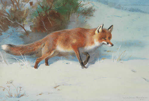Archibald Thorburn Fox - paintings purchased by Robert Perera Fine Art